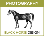 Black Horse Design Photography (Staffordshire Horse)