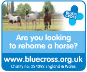 Blue Cross (Staffordshire Horse)