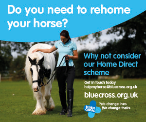 Blue Cross 2020 A (Staffordshire Horse)